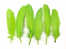 1 Pack - Lime Goose Satinettes Loose Feathers 0.3 Oz.