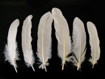 1 Pack - Ivory Goose Satinettes Loose Feathers 0.3 Oz.