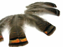 5 Pieces - Natural Wild Bronze Turkey Flats Feathers