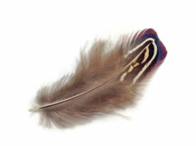 1 Pack - Natural Almond Ringneck Pheasant Plumage Feathers 0.10 Oz.