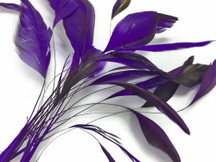1 Dozen - Eggplant Stripped Coque Tail Feathers