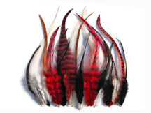 2 Dozen - Red Mix Short Grizzly Rooster Hair Extension Feathers