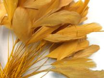 1 Dozen - Golden Stripped Coque Tail Feathers