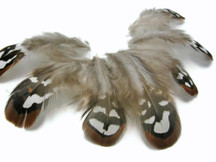 10 Pieces - Brown Reeves Venery Pheasant Plumage Loose Feathers