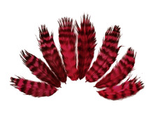 1 Dozen - Claret Grizzly Rooster Chickabou Fluff Feathers