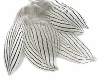 1 Pack - Natural Silver Pheasant Feathers 0.10 Oz.