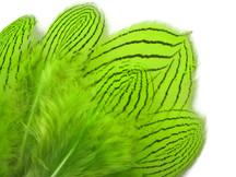 1 Dozen - Lime Silver Pheasant Feathers