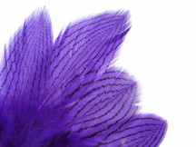 1 Dozen - Purple Silver Pheasant Feathers