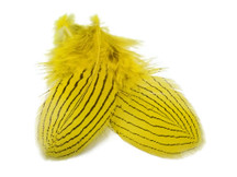 1 Dozen - Yellow Silver Pheasant Plumage Feathers