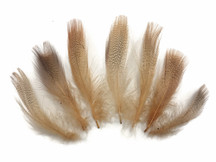 1 Dozen - Tan Mallard Duck Flank Plumage Feathers