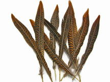 """10 Pieces - 6-8"""" Natural Golden Pheasant Tail Feathers"""
