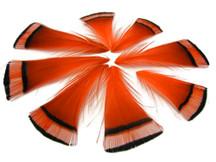 1 Dozen - Orange Golden Pheasant Tippet Feather