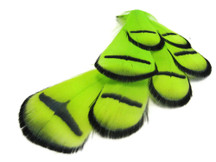 1 Dozen - Lime Lady Amherst Pheasant Tippet Feathers