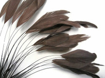 1 Dozen - Brown Stripped Coque Tail Feathers
