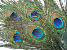 10 Pieces - Big Eye Natural Peacock Tail Eye Feathers