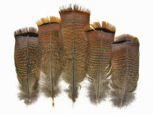 5 Pieces - Big Natural Brown Wild Barred Turkey Flat Tail Feathers