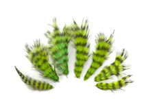 1 Dozen - Lime Green Grizzly Rooster Chickabou Fluff Feathers