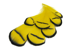 1 Dozen - Yellow Lady Amherst Pheasant Tippet Feathers