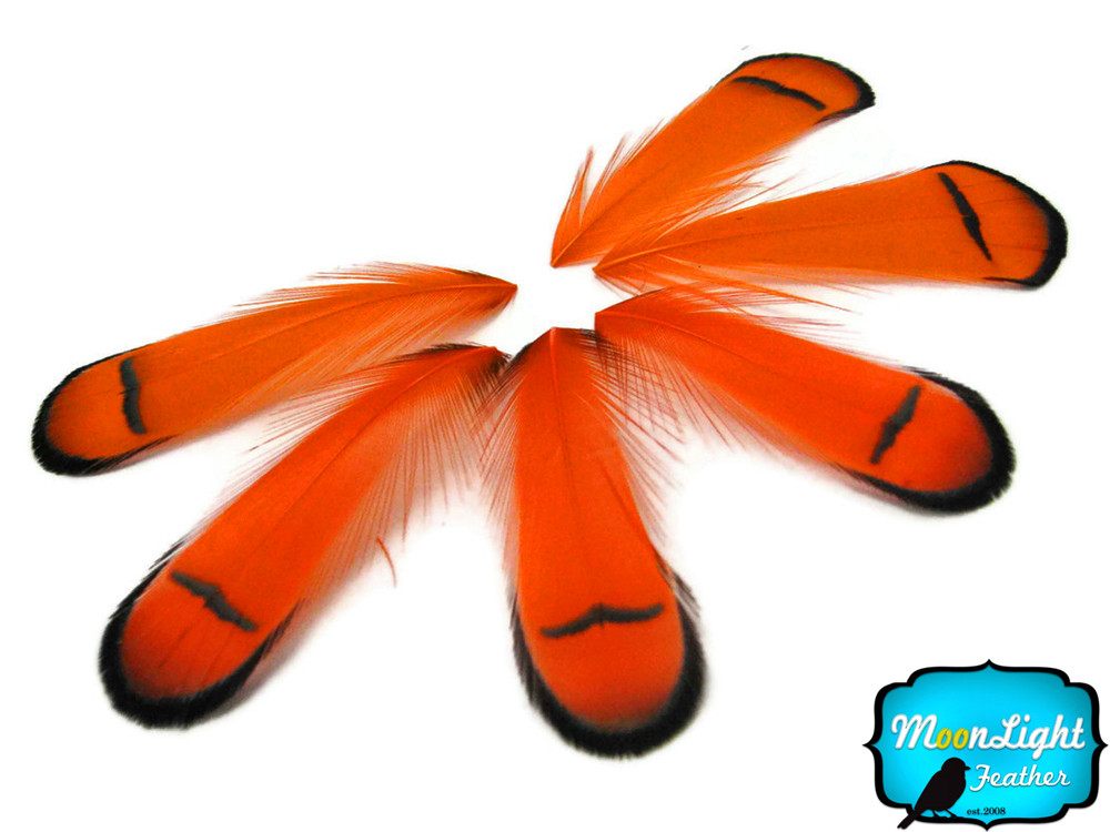 Dozen Orange Lady Amherst Pheasant Feathers Moonlight