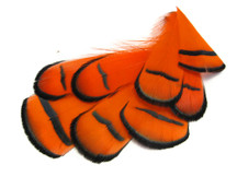 1 Dozen - Orange Lady Amherst Pheasant Tippet Feather