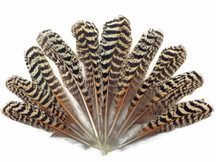 "10 Pieces -  6-10"" Natural Barred Mottled Peacock Wing Quills Feathers"