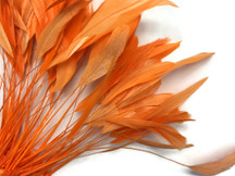 1 Dozen - Orange Stripped Coque Tail Feathers