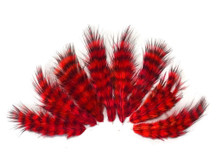 1 Dozen - Red Grizzly Rooster Chickabou Fluff Feathers