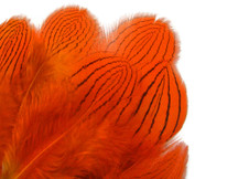 1 Dozen - Orange Silver Pheasant Plumage Feathers