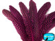 Hot Pink Guinea Wing Feathers Dyed Image 4