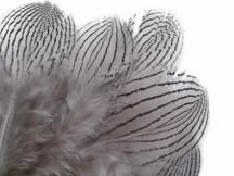 1 Dozen - Grey Silver Pheasant Feathers