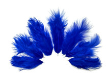 1 Dozen - Solid Royal Blue Rooster Chickabou Fluff feathers