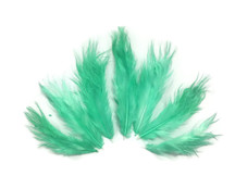 1 Dozen - Solid Aqua Rooster Chickabou Fluff Feathers