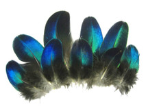 10 Pieces - Electric Blue Round Peacock Plumage feathers