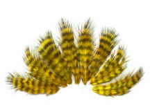 1 Dozen - Yellow Grizzly Rooster Chickabou Fluff Feathers