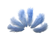 1 Dozen - Solid Light Blue Rooster Chickabou Fluff Feathers