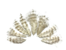 1 Dozen - Bleached Grizzly Rooster Fluff Chickabou Feathers