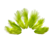 1 Dozen - Solid Lime Green Rooster Fluff Chickabou Feathers