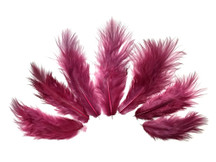 1 Dozen - Solid Claret Rooster Chickabou Fluff Feathers