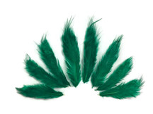 1 Dozen - Solid Peacock Green Rooster Chickabou Fluff Feathers
