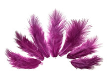 1 Dozen - Solid Magenta Rooster Chickabou Fluff Feathers