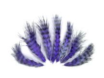 1 Dozen - Lavender Grizzly Rooster Fluff Feathers