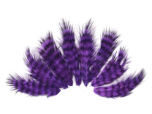 1 Dozen - Purple Grizzly Rooster Chickabou Fluff Mini Feathers