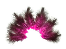 1 Dozen - Pink & Black Rooster Chickabou Fluff Feathers