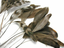 1 Dozen - Natural Chinchilla Stripped Coque Tail Feathers