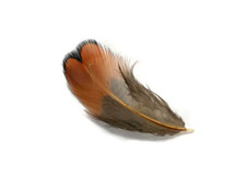 1 Pack - Laced Heart Ringneck Pheasant Plumage Feathers 0.10 Oz.