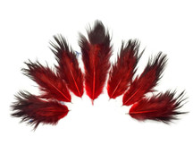 1 Dozen - Solid Red & Black Rooster Chickabou Fluff Feathers