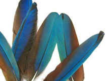 4 Pieces - Iridescent Blue And Red Greenwing Macaw Feather -Rare-