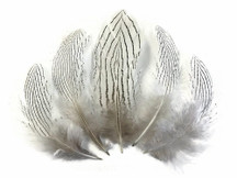 6 Pieces - Large Natural White Silver Pheasant Barred Plumage Feathers