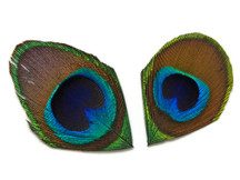 10 Pieces - Trimmed Natural Peacock Tail Eye Feathers