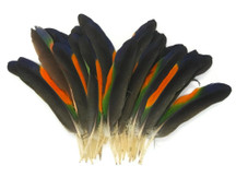1 Pair - Multi-Color Amazon Parrot Wing Feathers - Rare-